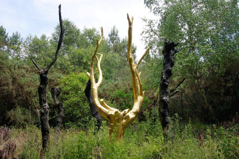 arbre d'Or de la forêt de Brocéliande